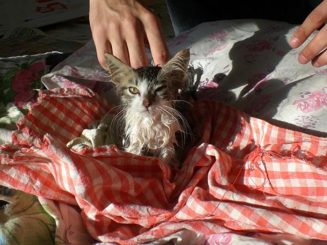 кошка после ванны