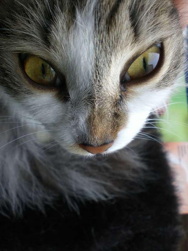 кошка с другой планеты