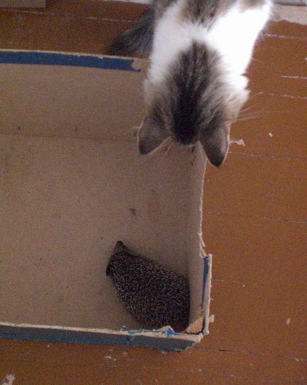 ежик и кошка